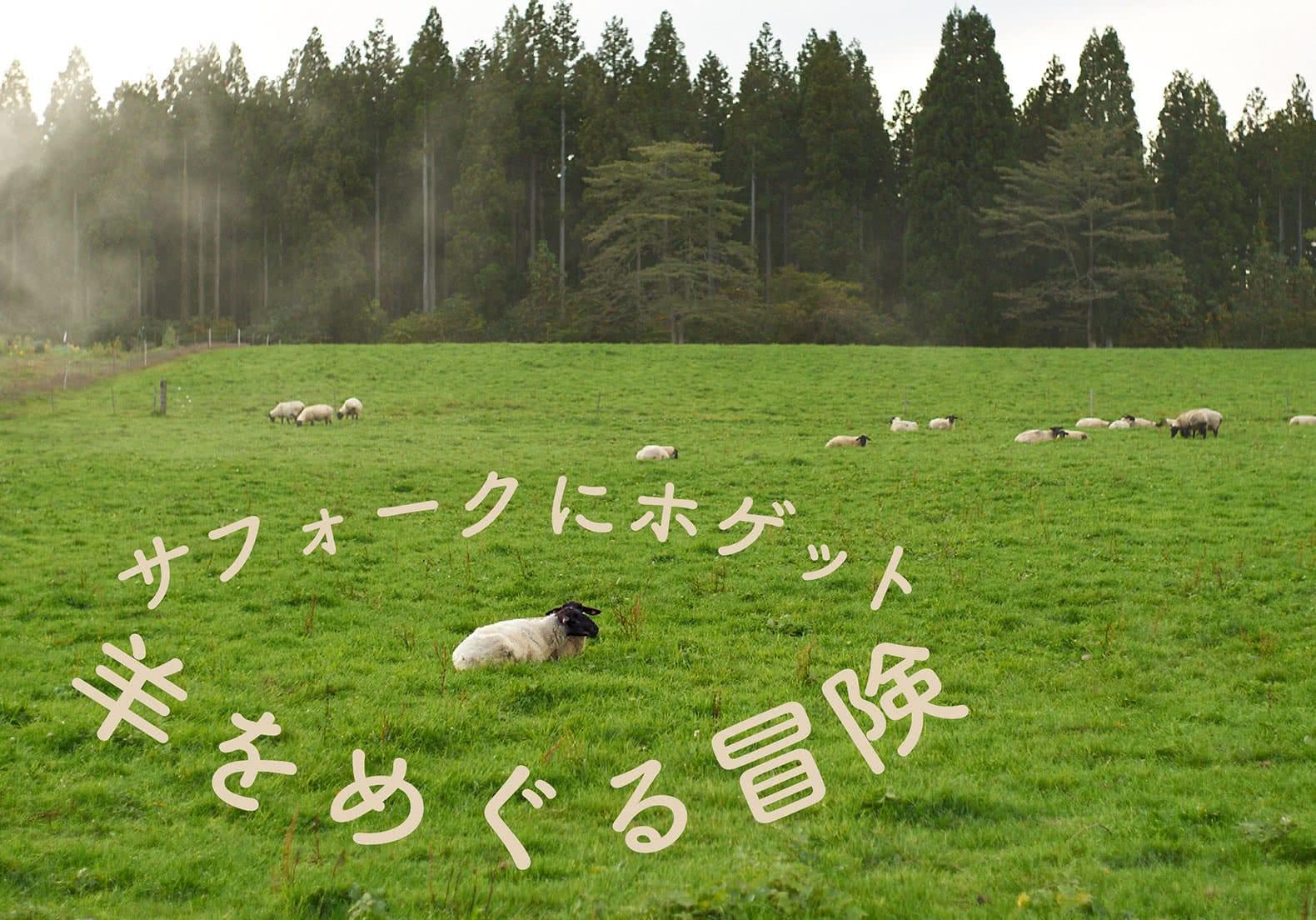 どこで は 黒い すか 羊